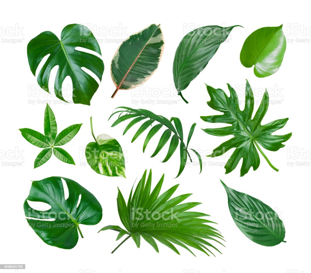 Collage of exotic plant green leaves isolated on white background stock photo