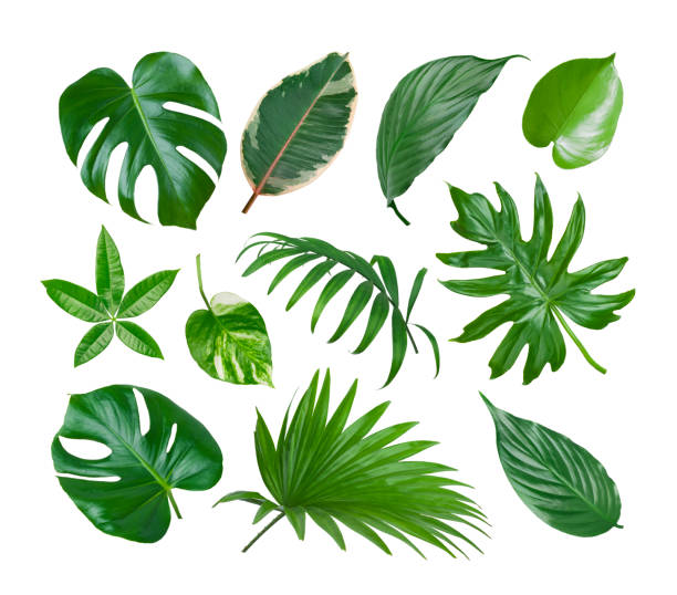 collage of exotic plant green leaves isolated on white background - leaf imagens e fotografias de stock
