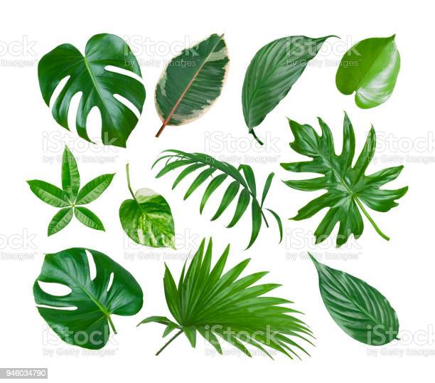 Photo of Collage of exotic plant green leaves isolated on white background