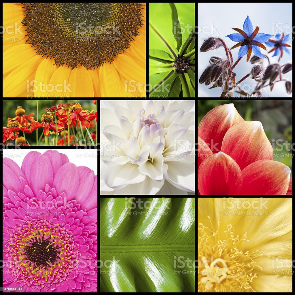 Collage of flowers in rectangles royalty-free stock photo