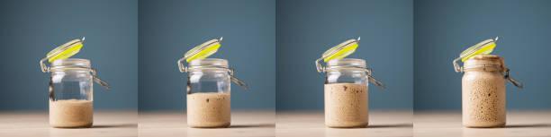 Collage von vier Fotos von hausgemachten Starter Hefe wächst – Foto