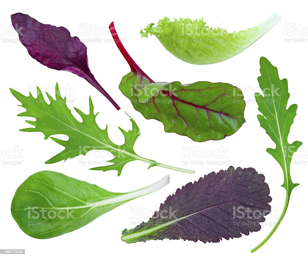 Collage of fresh herbs on white background stock photo