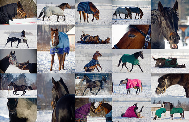 Collage of horses playing in snow picture id523216611?b=1&k=6&m=523216611&s=612x612&w=0&h=r0w kh9scq2r37k tfmgjfzspcb07nqkwugaei2fbuw=