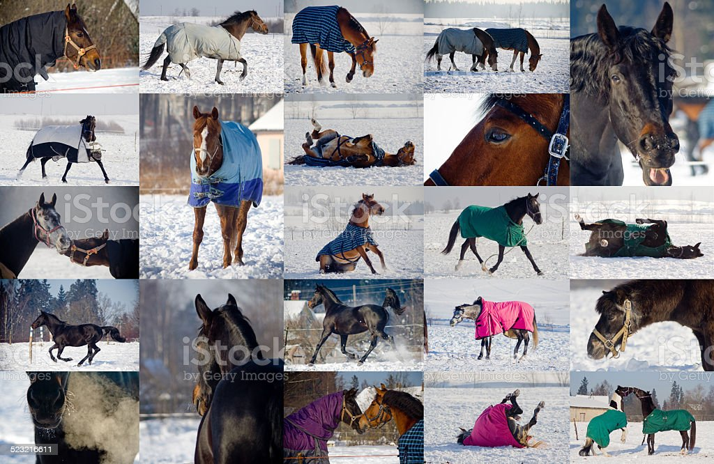 Collage of horses playing in snow stock photo