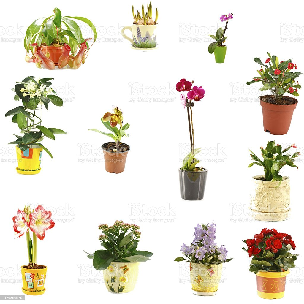 collage of indoor plants royalty-free stock photo