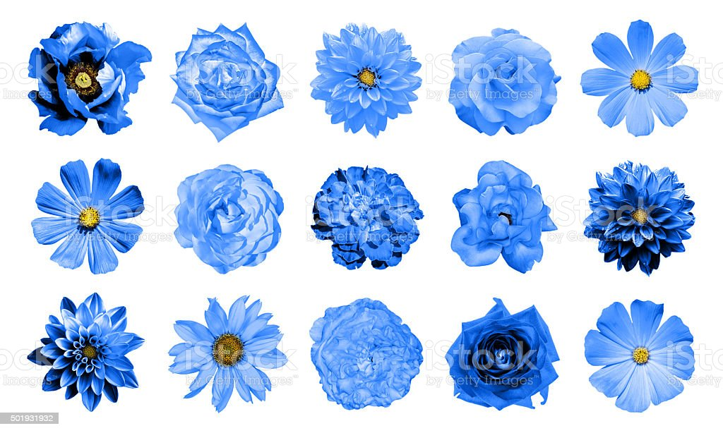 Collage of natural and surreal blue flowers 15 in 1 stock photo