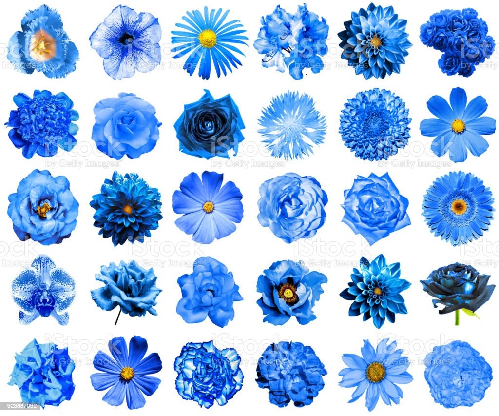 Collage Of Natural And Surreal Blue Flowers 30 In 1 Peony Dahlia