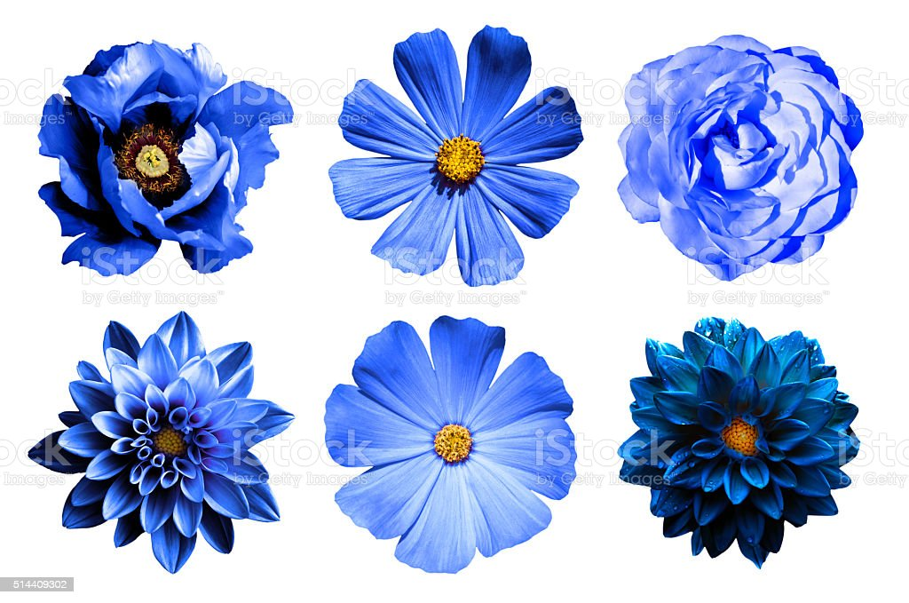 Collage of natural and surreal blue flowers 6 in 1 stock photo