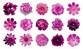 istock Collage of natural and surreal pink flowers 15 in 1 515319684