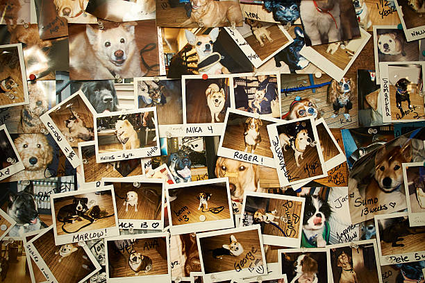 Collage of Polaroid photos of different dogs a wide collection of dogs on wall signature collection stock pictures, royalty-free photos & images