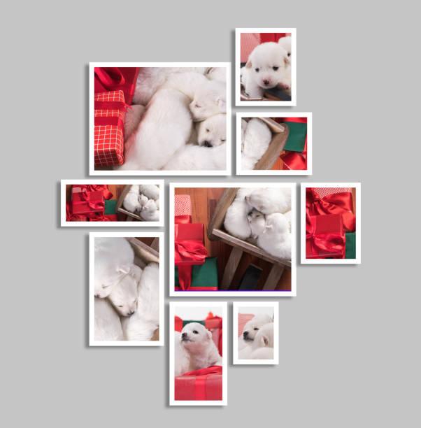 collage aus hündchen mit weihnachtsgeschenken - foto collage geschenk stock-fotos und bilder