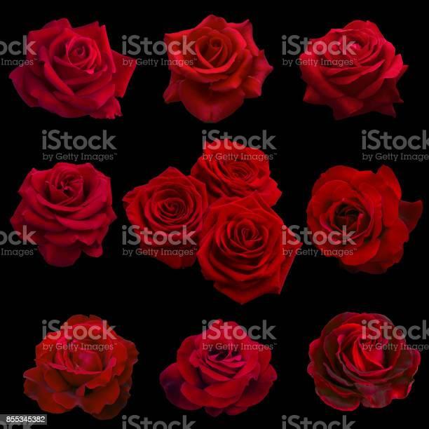 Collage of red roses picture id855345382?b=1&k=6&m=855345382&s=612x612&h=rm7tpyfdgexxooo70n yqwi32h6wz8llwx2wkwsqivc=