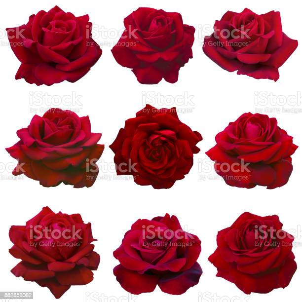 Collage of red roses picture id882856062?b=1&k=6&m=882856062&s=612x612&h=mrn vaasof neh5w55ucqe2ngpr6gv0dmooyzxkbkbw=