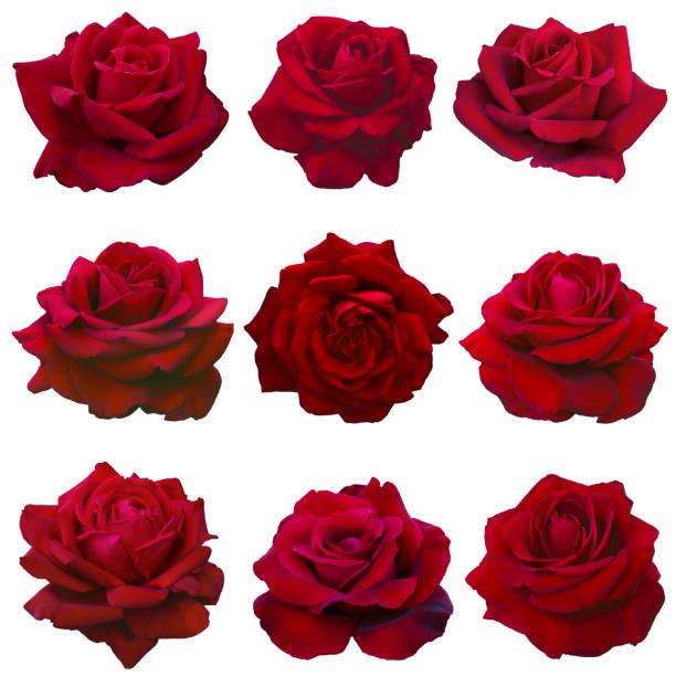 collage de roses rouges - Photo