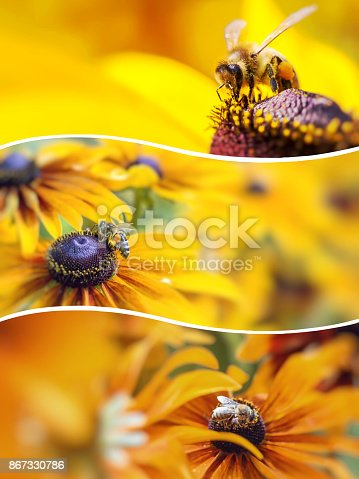 istock Collage of Spring images - naturel background 867330786