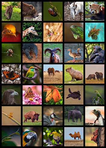 Collage of wild animals made high resolution and suitable for A4 format printing at 300 dpi.