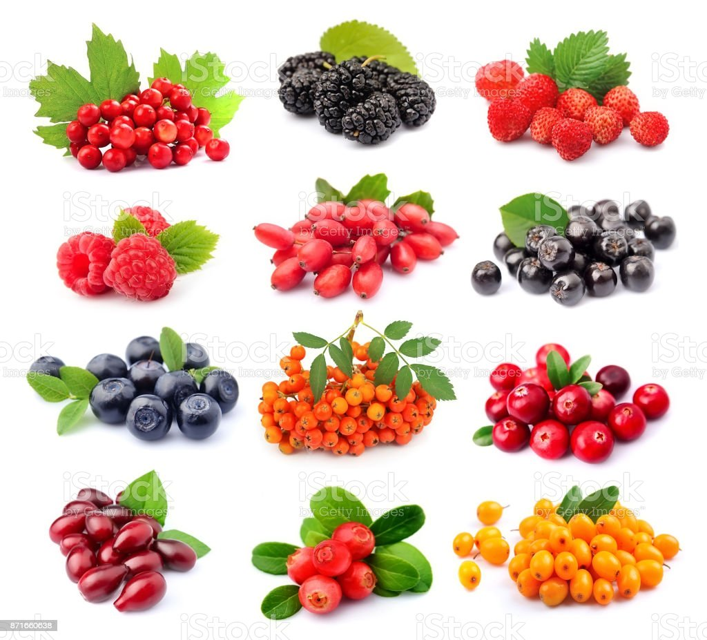 Collage of wild berry isolated stock photo