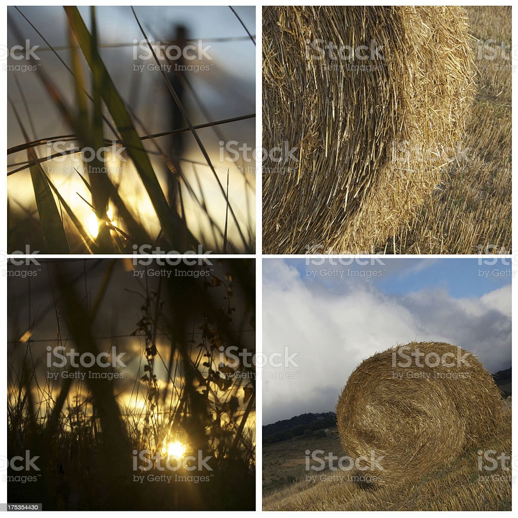Collage rural royalty-free stock photo