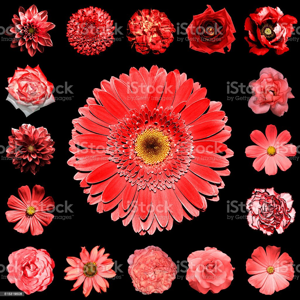 Mix collage square styled of natural and surreal red flowers 17 in 1:...
