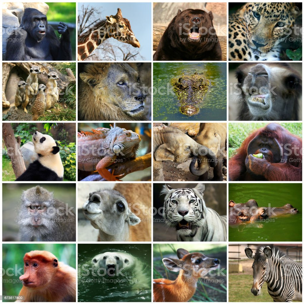 Collage with different animal faces. stock photo