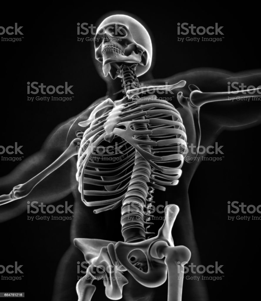 Collar Bone Xray Human Anatomy Skeletal System Torso Ribs Stock