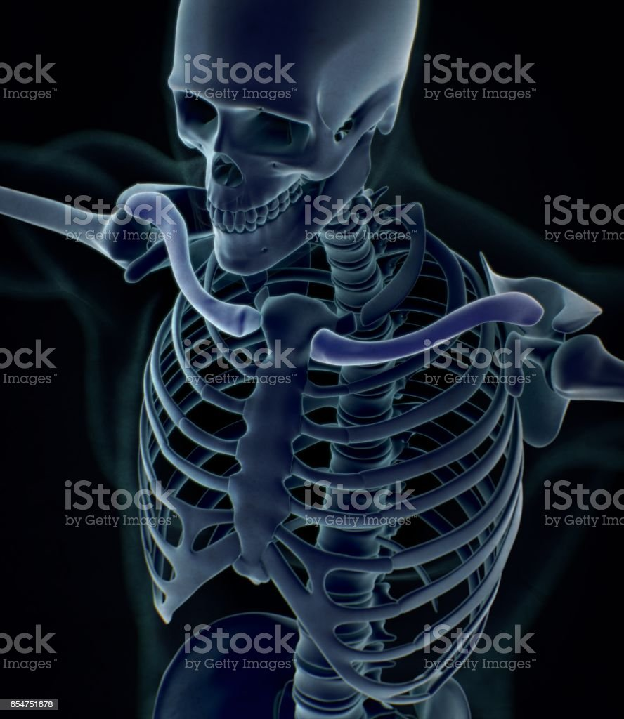 Collar bone xray. Human anatomy skeletal system, torso, ribs. stock photo