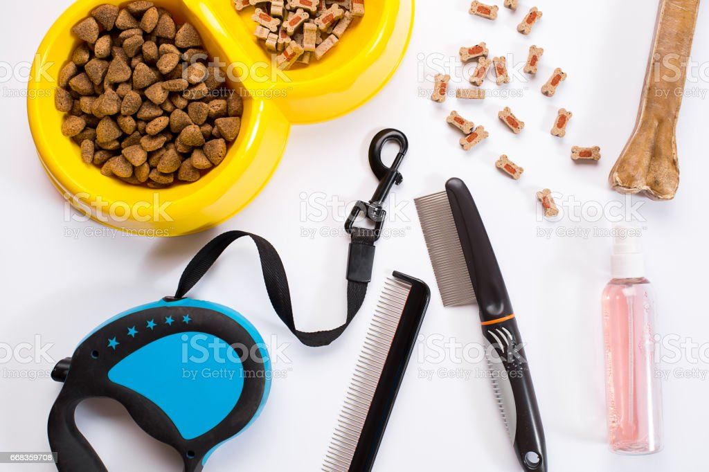 Collar, bowl with feed, leash, delicacy, combs and brushes for dogs. Isolated on white background stock photo
