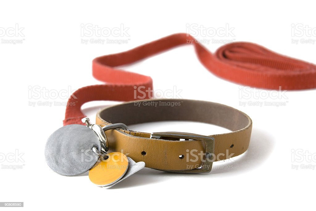 Collar with tags stock photo
