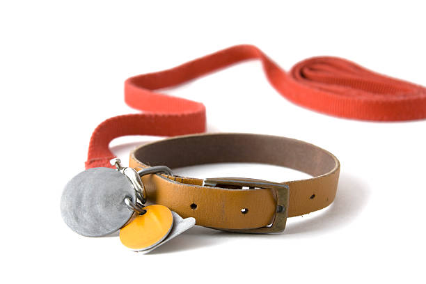 Collar with tags Leather dog colar with registration tags and red leash attached. Isolated on white background collar stock pictures, royalty-free photos & images