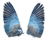 istock Collared Dove bird wings 187230927