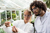 istock Colleagues inspecting leaf on petri dish 599998072