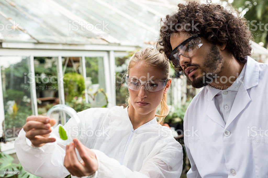 Colleagues inspecting leaf on petri dish stock photo