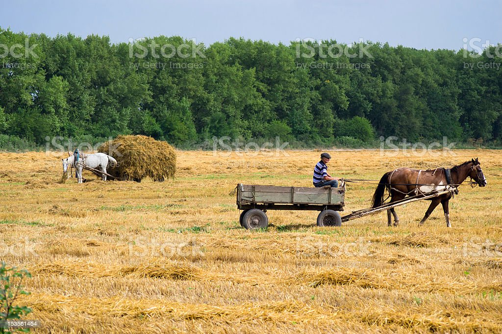 collect a haystack stock photo