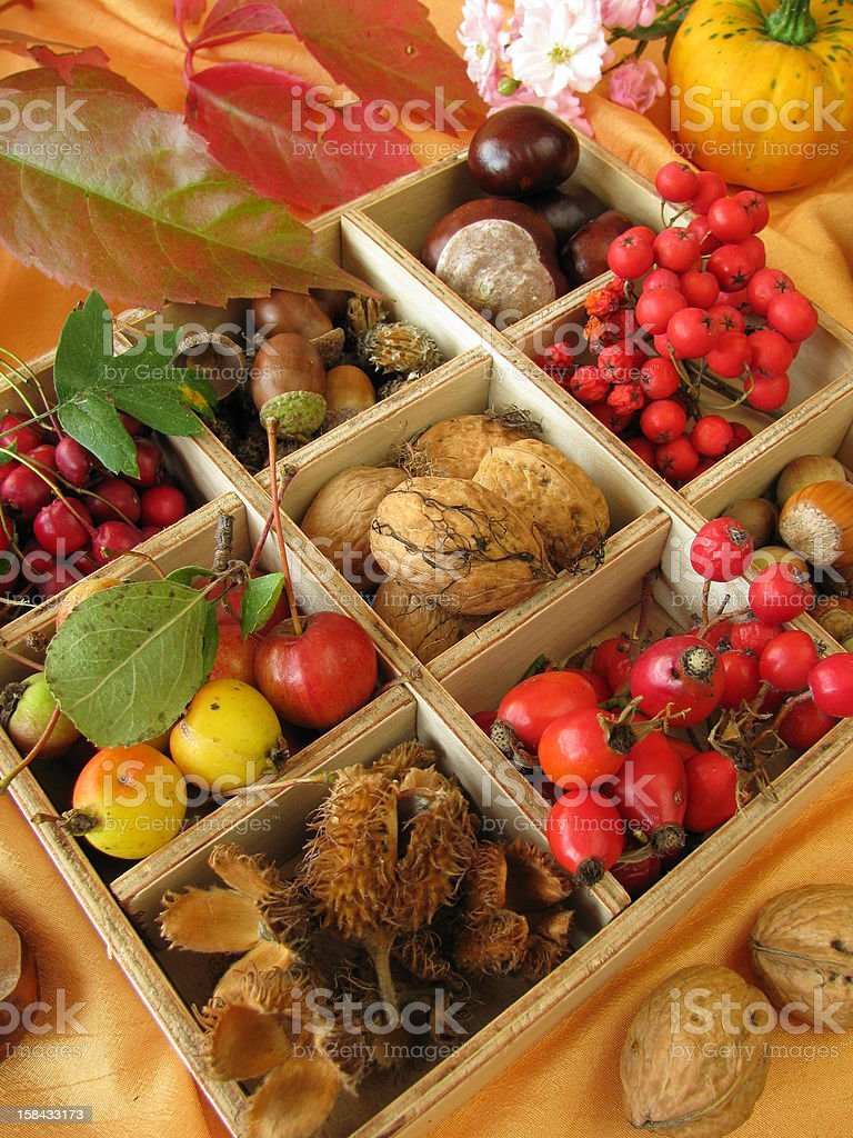 Collecting box with walnuts, chestnuts and other fall fruits royalty-free stock photo
