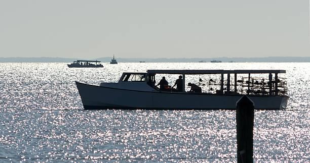 collecting crabs on the chesapeake bay - blauwe zwemkrab stockfoto's en -beelden