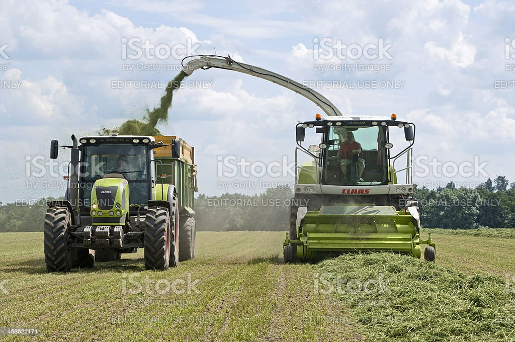 Collecting Grass stock photo