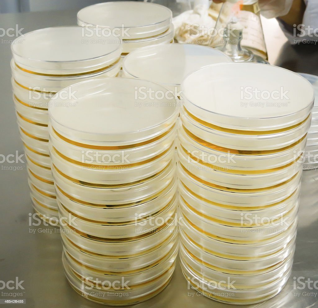 collecting plate with culture medium stored in a laboratory stock photo