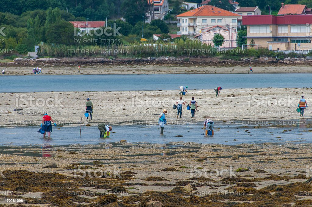 Collecting seafood in Galicia stock photo