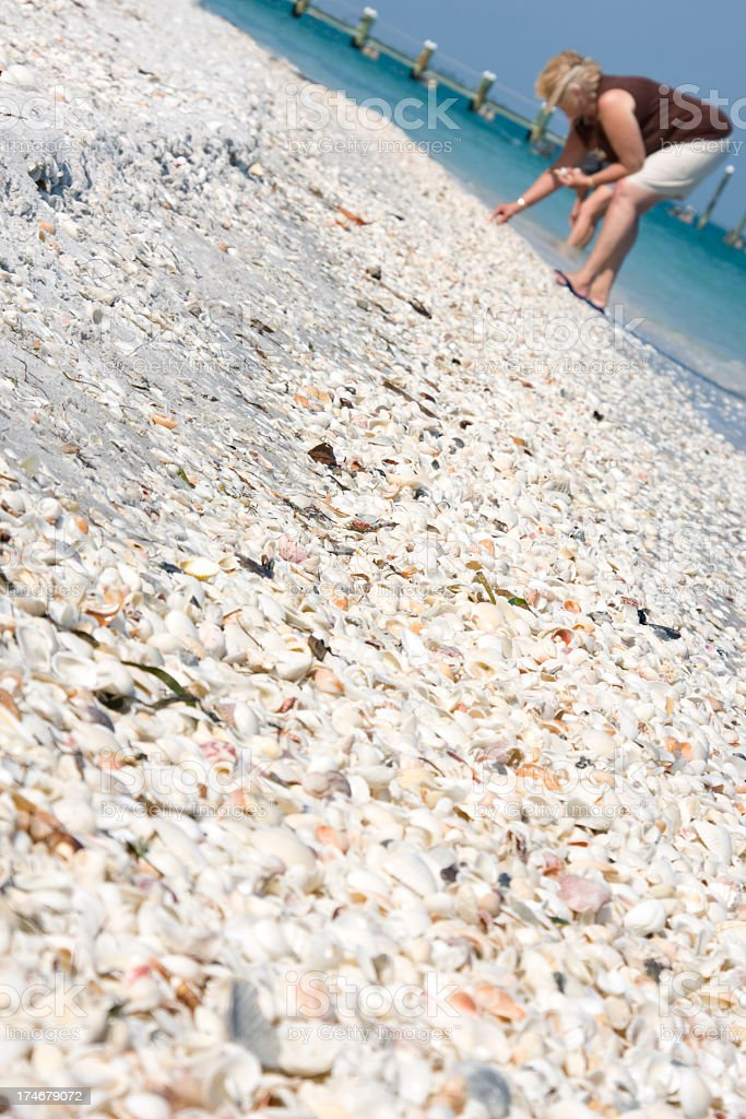 Collecting Shells stock photo