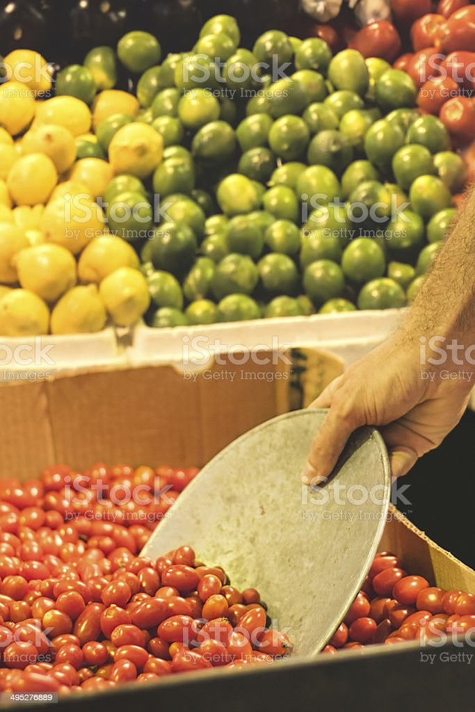 Collecting tomatoes stock photo