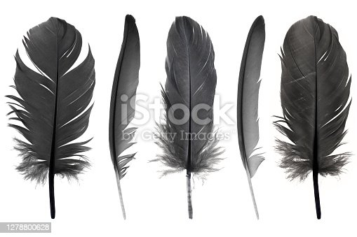 istock Collection black feather isolated on white background 1278800628