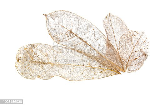 Collection Dry leaves on isolated white textures background. Dried pattern outdoor dead plant branch nature. Leafs flora yellow stem symbol macro old color detail back cover.