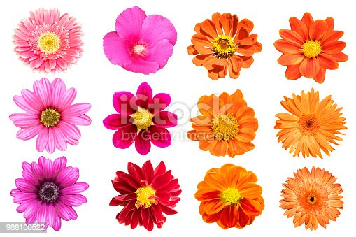 collection flower isolated on white background