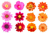istock collection flower isolated on white background 988100522