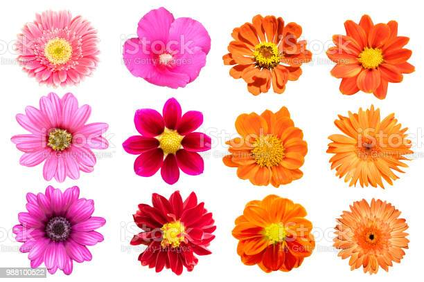 Photo of collection flower isolated on white background