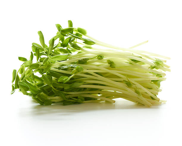 Collection freshly picked pea sprouts stock photo