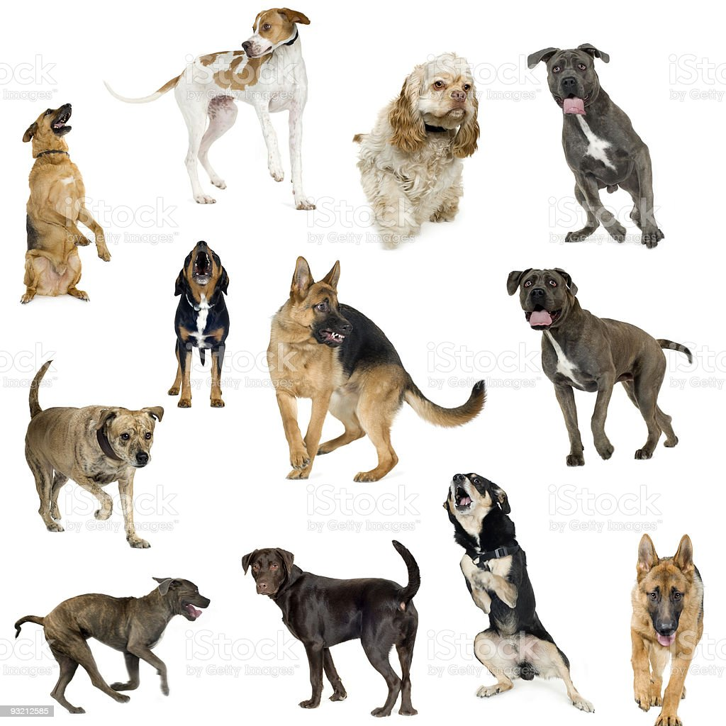 Collection of 12 dogs in different positions royalty-free stock photo