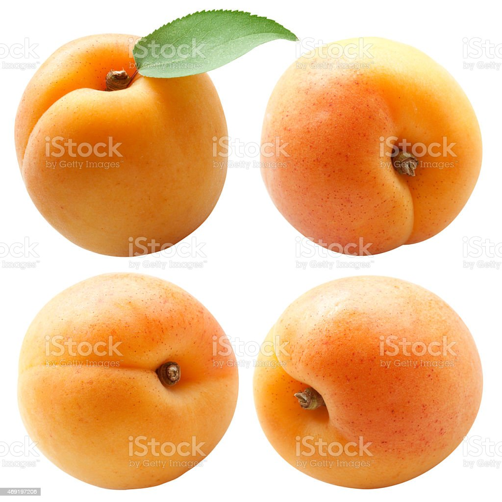 Collection of apricots with green leaf isolated on white stock photo