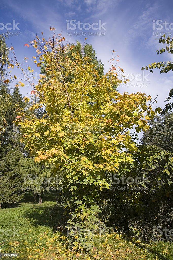 Collection of autumn leaves in tree nurseries 2 stock photo