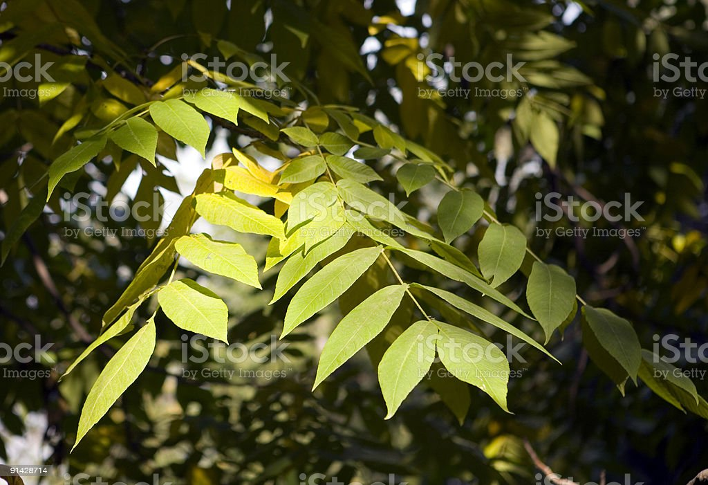 Collection of autumn leaves in tree nurseries 4 stock photo
